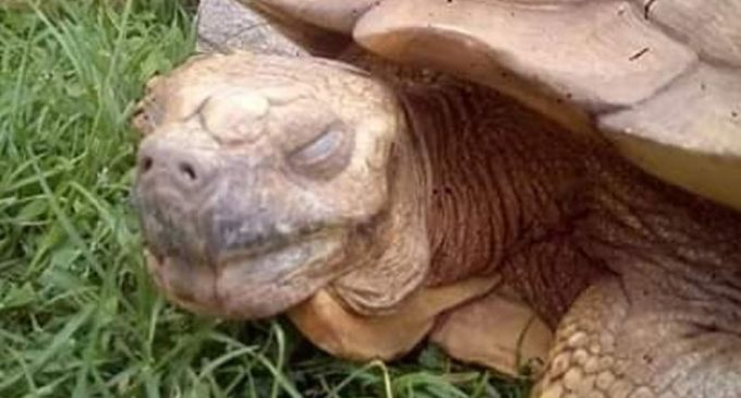 Worlds oldest Tortoise dies in Nigeria at 344 years