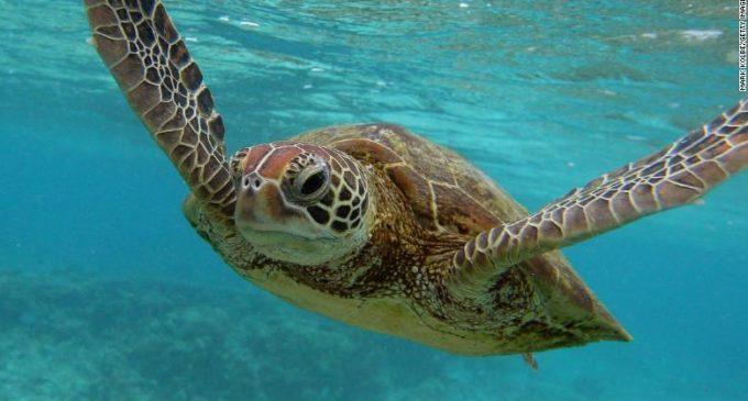 104 Plastics kill sea turtle